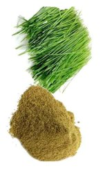 Bermuda Grass Powder, Packaging Type: PP Bag, Pack Size (gram): 5 Kg