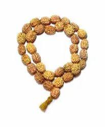 3 Mukhi Rudraksha Kantha / Kanthi Mala