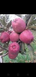 A grade apples