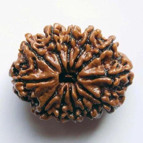 Brown 12 Mukhi Rudraksha, Packaging Type: Box