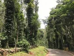 Pillar Coffee Estates And Farming