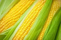 Corn Whole Fresh, For Food