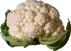 Greenish White A Grade Fresh Cauliflower, Pesticide Free  (for Raw Products)