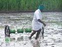 Improved Rice Seeder