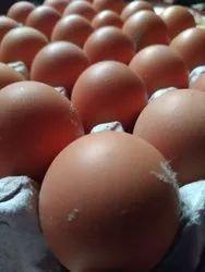 Brown BV380 Hen Eggs, Packaging Type: Crate