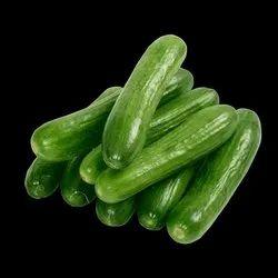 A Grade Fresh Cucumber, Gunny Bag, Packaging Size: 20 Kg