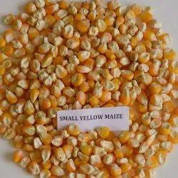 Small Yellow Maize Seed, Organic