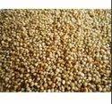 Organic Unpolished Kodo Millet, Packaging Size: 25 Kg
