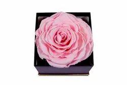 Custom Long Lasting Jumbo Roses, Size: 8 Cms