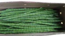 A Grade Moringa Drumstick