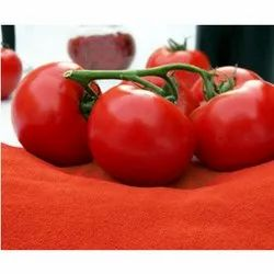 Tomato Powder for Hospitality Industry
