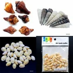 Justkraft Multicolor Model Shells Accessories For Craft Projects, Packaging Type: Box