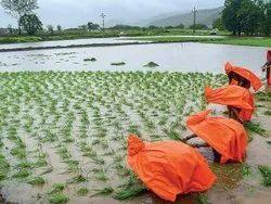 PE Orange Farming Apron, Size: Medium