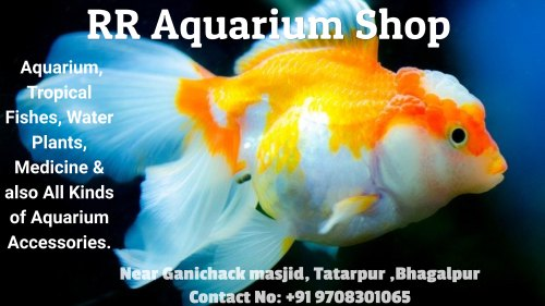 Rr Aquarium Shop Tropical Fish Aquarium Accessories From Bhagalpur