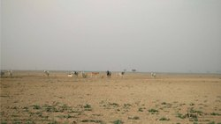 Non Agriculture Land In Sandhida, Dholera Sir, Size/ Area: 95842