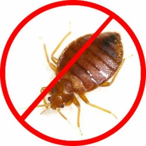 Bed Bugs Pest Control Service In Warje Pune Id 7746884612