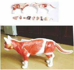Cat Anatomical Model
