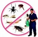 Commercial Chemical Based Termite Pest Control Service, In Chennai