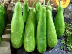 A Grade Fresh Bottle Gourd, Pesticide Free  (for Raw Products)