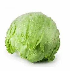 Green Vegetable Lettuce