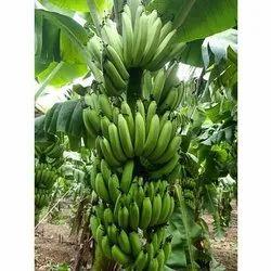 A Grade Pan India Fresh Raw Bananas, Packaging Size: 5 Kg