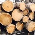 Sheesham Wood Logs