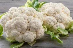 White Cauliflower, Packaging Size: 5 Kg, Packaging: Carton