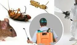 Residential And Industrial Cockroach Pest Management, In Delhi
