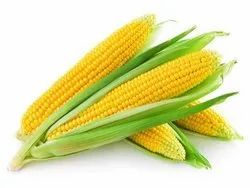 Yellow Maize, Organic