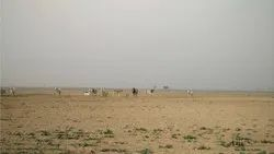 Non Agricultural Industrial Land In Dholera Sir