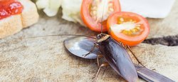 COCKROACH CONTROL SERVICES FOR RESIDENTS