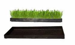 Wheat Grass Tray 60 Cm x 29 Cm