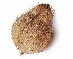 A Grade Solid Husk coconut/semi husk coconut, Coconut Size: Large