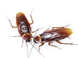Home Chemical Treatment cockroach pest control services