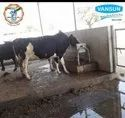 Cattle Water Trough