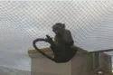 Monkey Safety Net