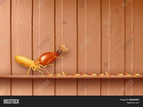One Time We Used Bayer Chemicals Termite Control Services Id 22639691891