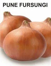 Natural Onion Pune Fursungi Seeds