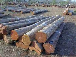 Teak Wood