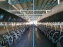 Rapid Exit Milking Parlor