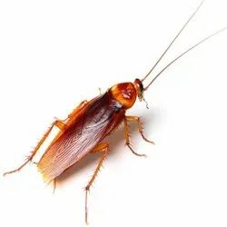 Home Chemical based Pestico Cockroach Treatment