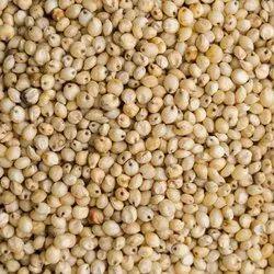 Sorghum Jowar Millet Seed