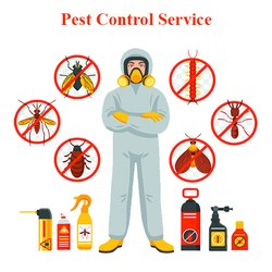 Home Chemical based bee control services
