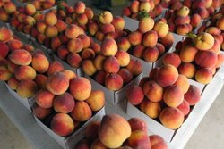 Fresh Exotic Peach, Packaging Size: 5 Kg