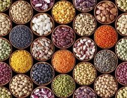 Aradhana Natural 24 Mantra Organic Pulses, High in Protein, Packaging Size: 1Kg to 25 Kgs