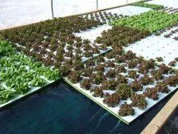 Automatic Indoor Farming
