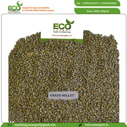 Grain Green Indian Pearl Millet, Bajra, Gluten Free