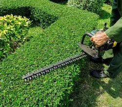 Standard Low Maintenance Landscaping services, India, Coverage Area: <1000 Square Feet