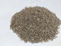 Kali Jeeri - Centratherum Anthelminticum (Willd.) - Kalijiri