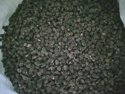 Drumstick Seed